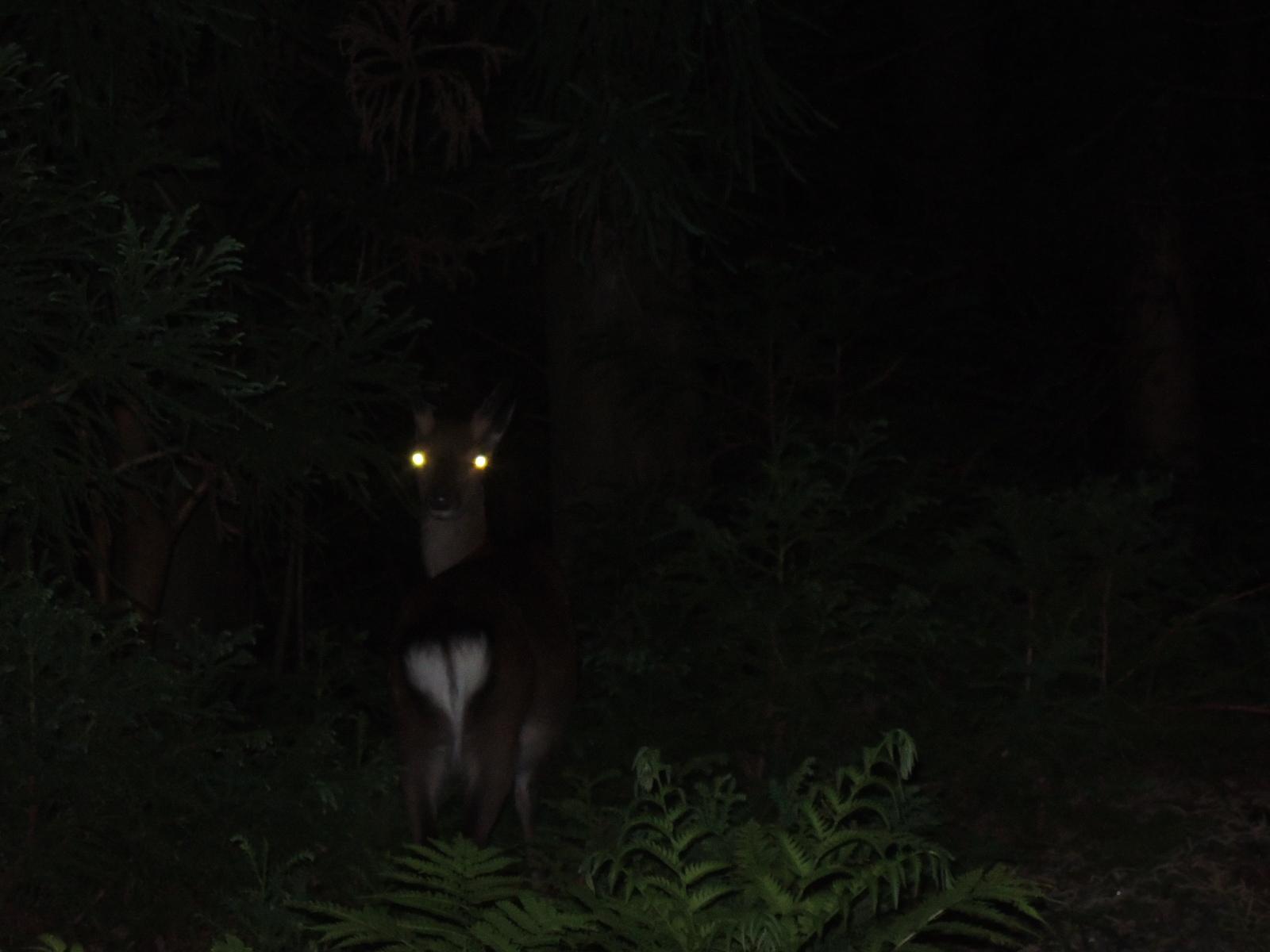 屋久島の闇夜に光るものは・・・...